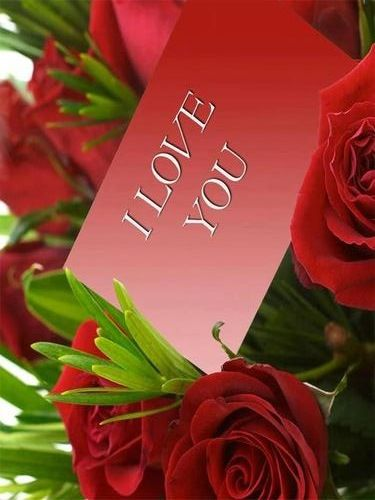 Missed All My Pinning Friends While Making A Second Account Hugs To All Of You Thank You So Much For Your Beauti My Funny Valentine Beautiful Blog Red Roses