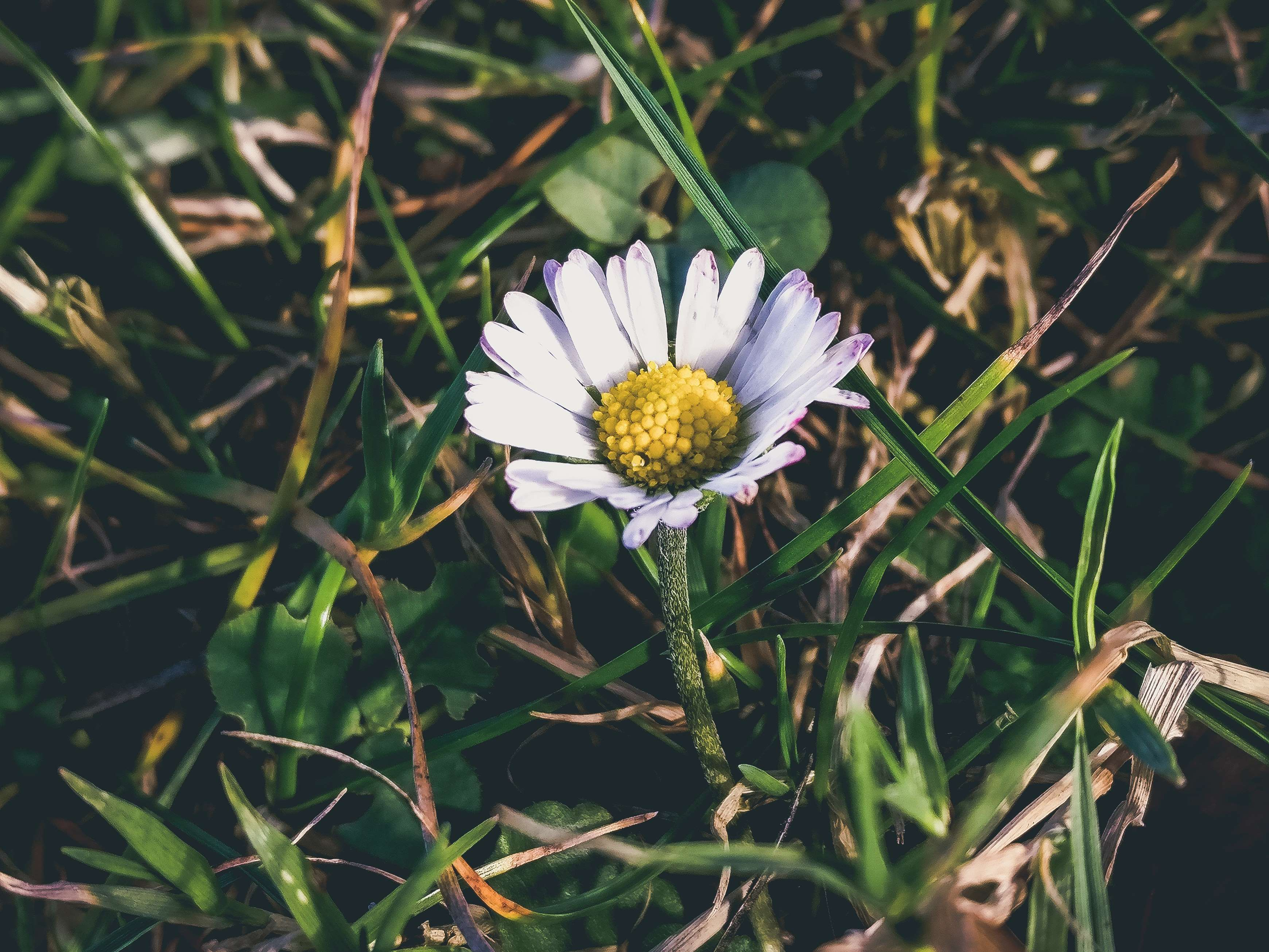#autumn #bloom #blooming #blossom #bright #close up #color #daisy #fall #flora #flower #grass #growth #leaf #nature #outdoors #petals #pollen #season #summer
