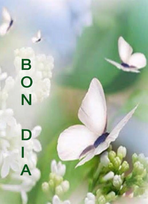 Bon Dia Buenos Dias Good Morning Morning Greeting Good