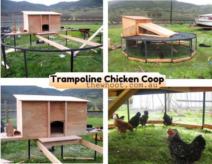 how to make a chicken coop trampoline