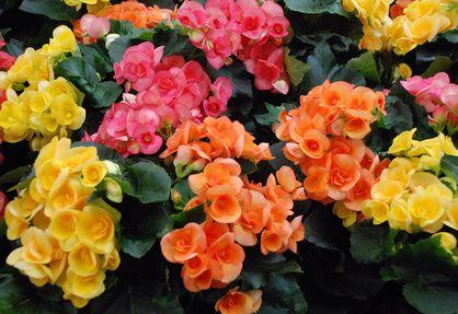 Balkonpflanzen Lexikon Gardening Pinterest Garden Plants And