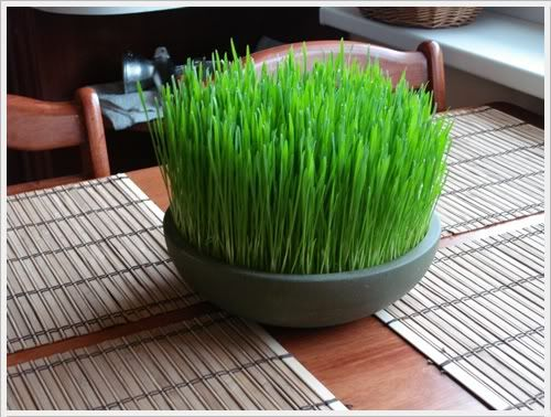 Wheatgrass!  Not only because it makes me feel amazing... but because it makes the house look great too!