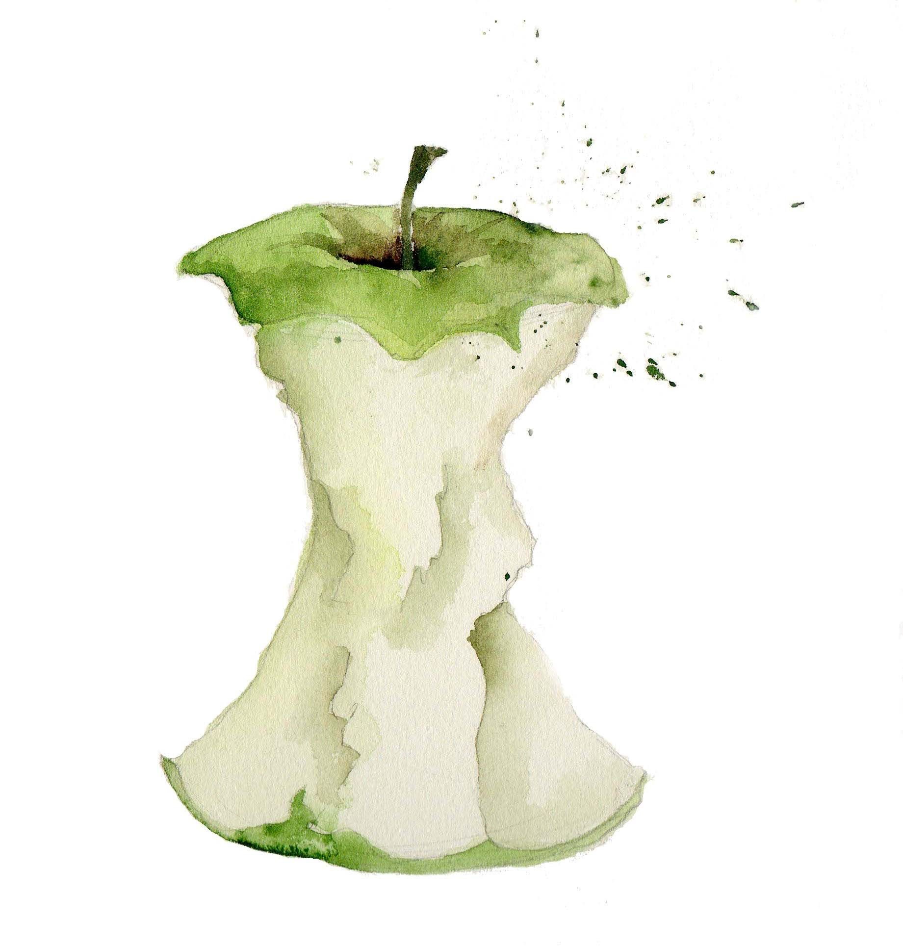 Watercolour illustration of apple core by Jill Mercer