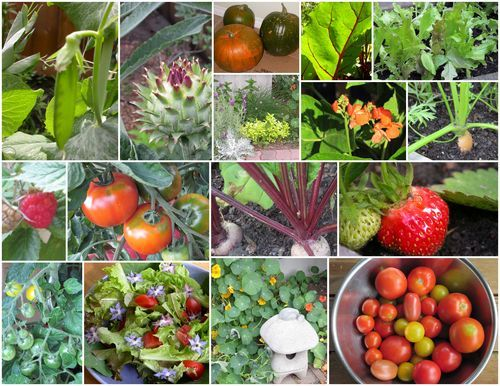 Vegetable Planting Guide Mediterranean Climate 400 x 300