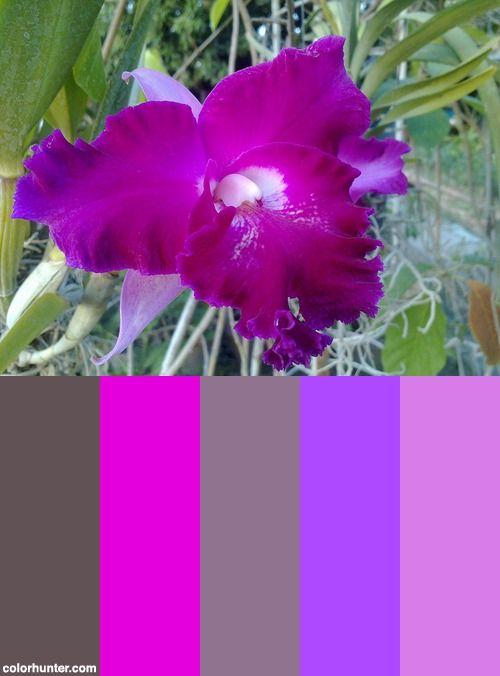 Mil S Purple Orchid Color Scheme