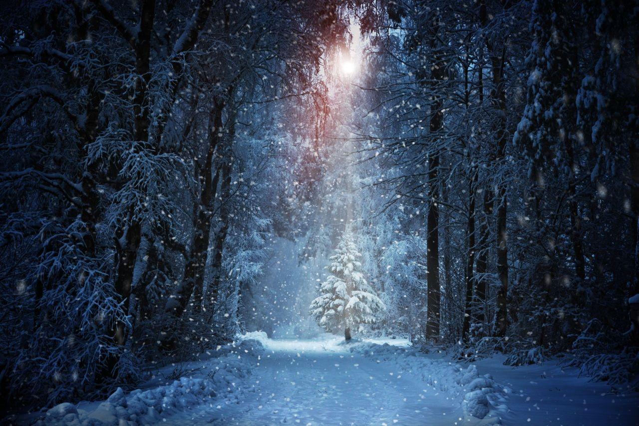 Fotos Bilder Winter Walder Baume Schnee Fichten Natur Bilder 463783 Download Christmas Photography Backdrops Winter Backdrops 8k Wallpaper
