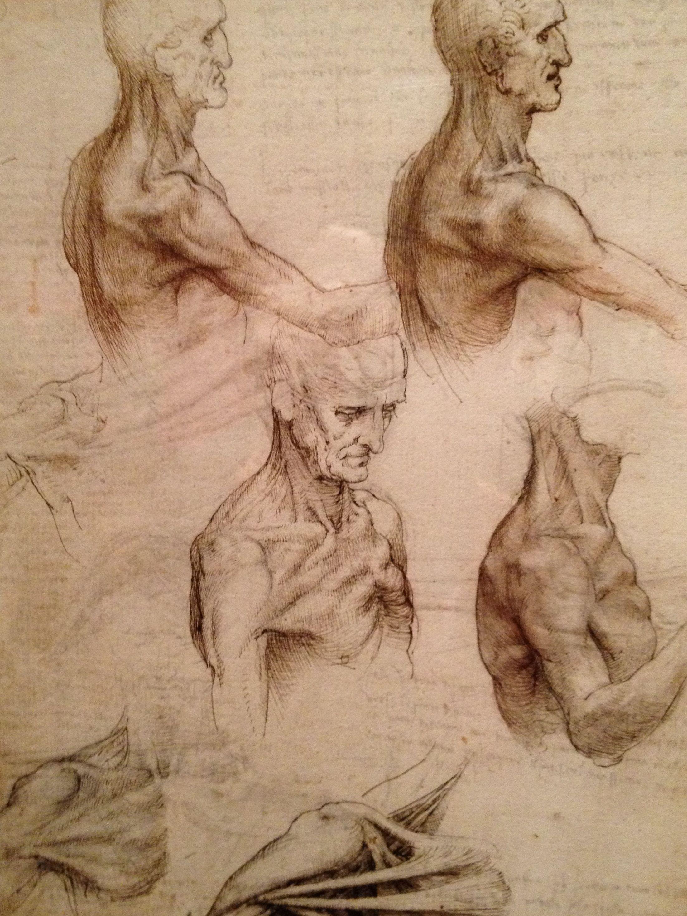 Leonardo Da Vinci Anatomist He Loved The Study Of The Human Body