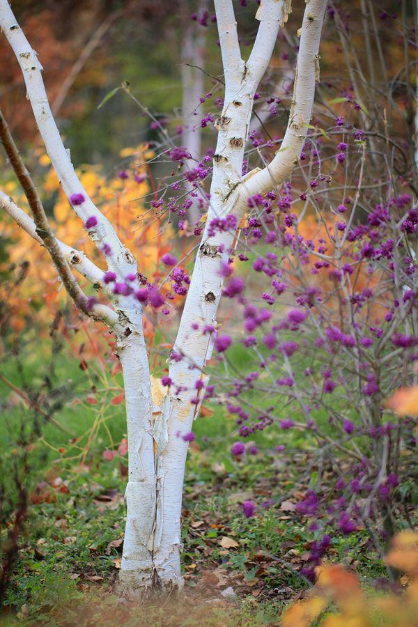 Jardins d\'Hiver : une saison réinventée\