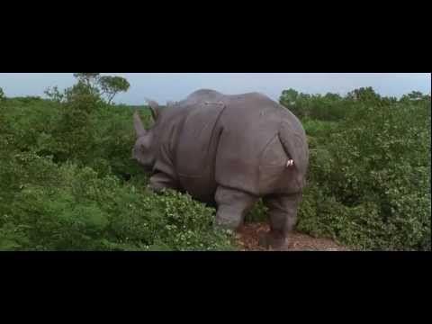 quotkinda hot in these rhinosquot ace ventura when nature