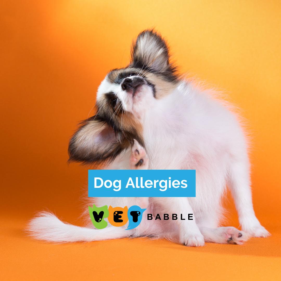 Dog Allergy Symptoms, Dog Care, Dogs