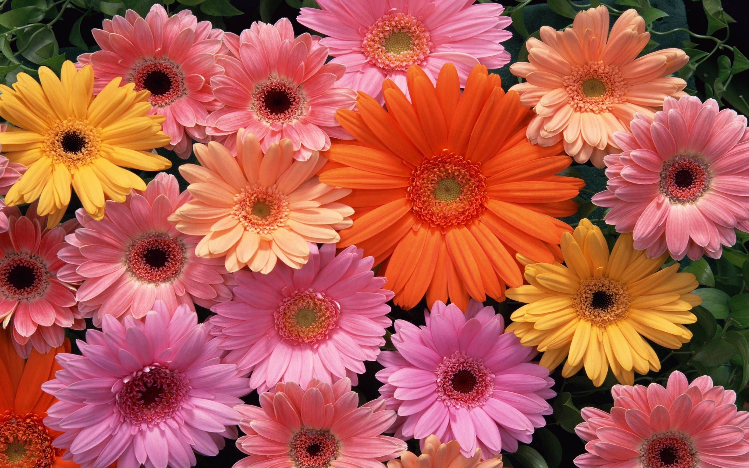 Download This Awesome Wallpaper Wallpaper Cave Beautiful Flowers Images Beautiful Flowers Pictures Free Flower Wallpaper