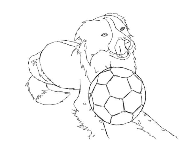 Border Collie Coloring Page Border Collie Colors Coloring Pages Yarn Painting