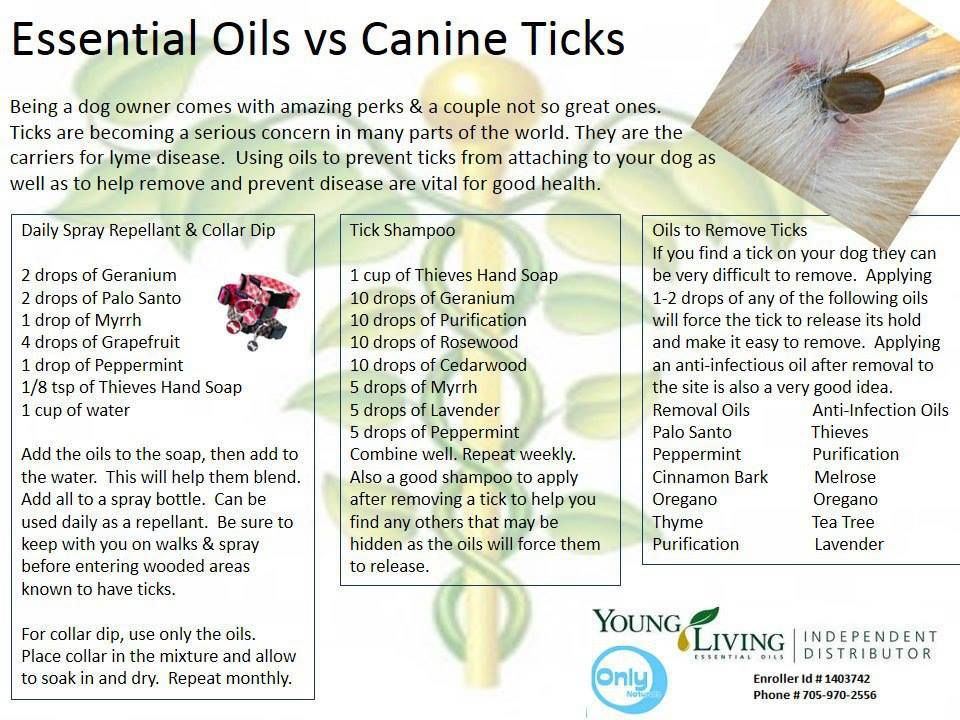 Young Living oils that control ticks. Ylso Pinterest
