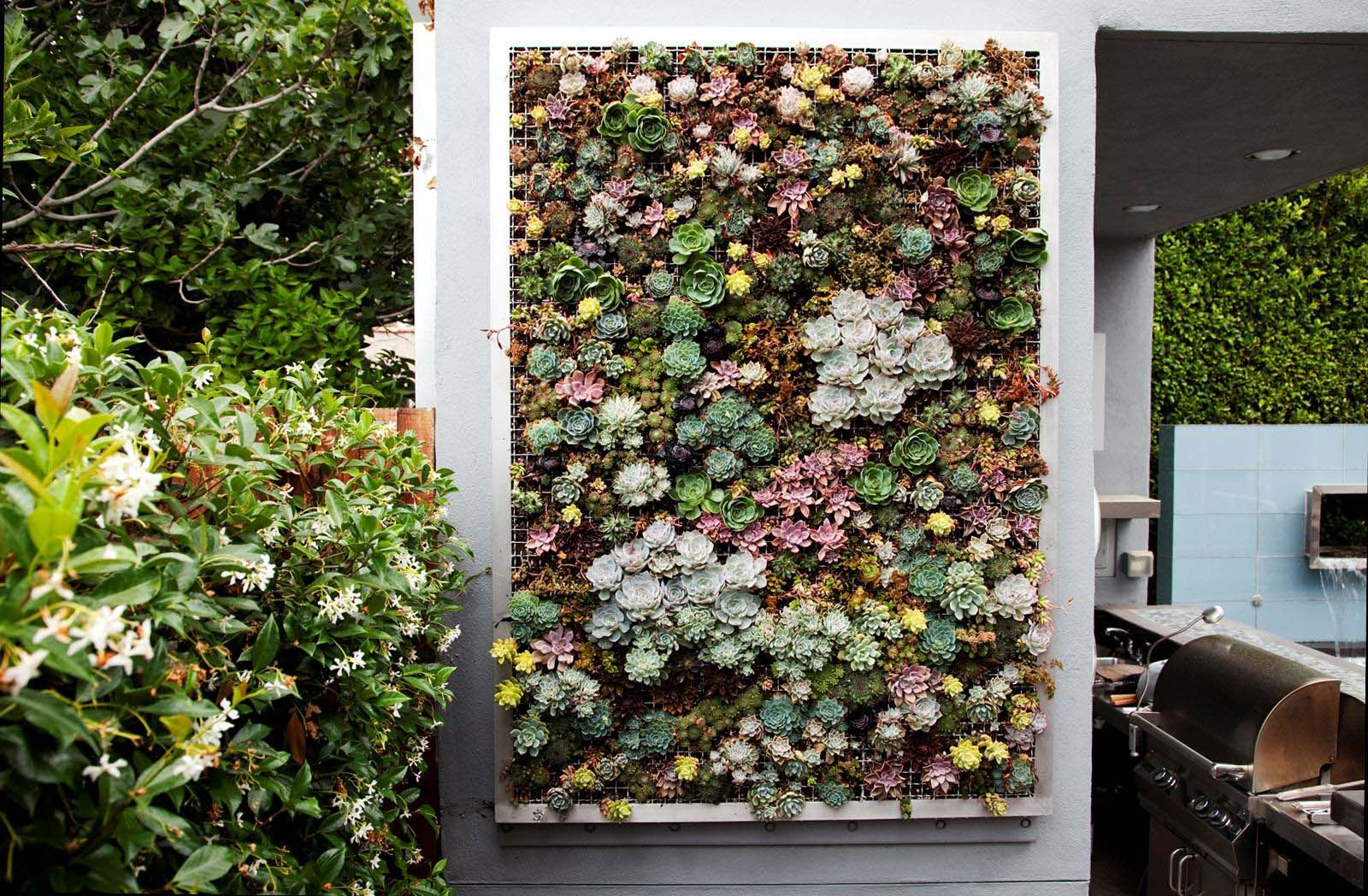 Growing A Vertical Wall Garden Of Succulents Living Walls And Vertical  Gardens