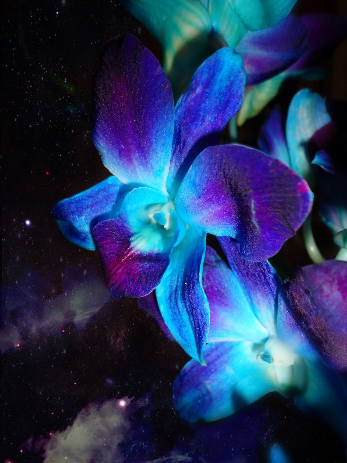 Blue and purple orchid wallpaper wallpapers pinterest blue and purple orchid wallpaper izmirmasajfo