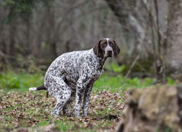What Should My Dog House Training Dogs Dogs Pooping