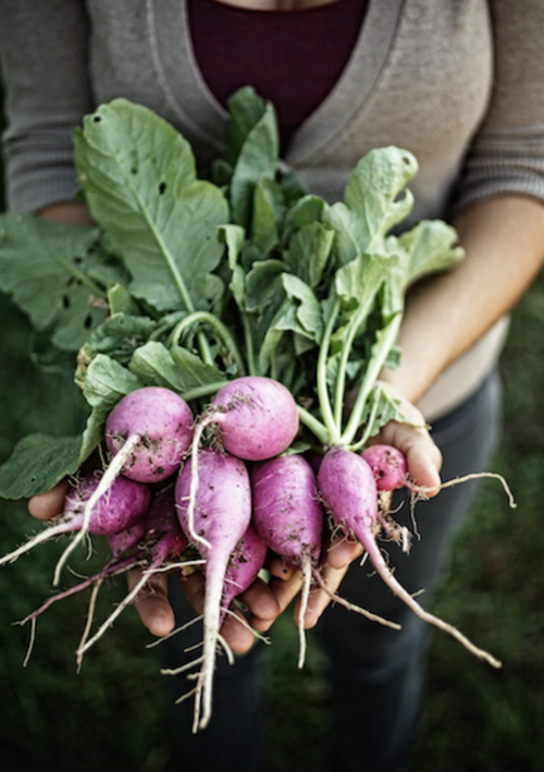 EAT HEALTHY Radishes Jody Horton Photography Farmhouse