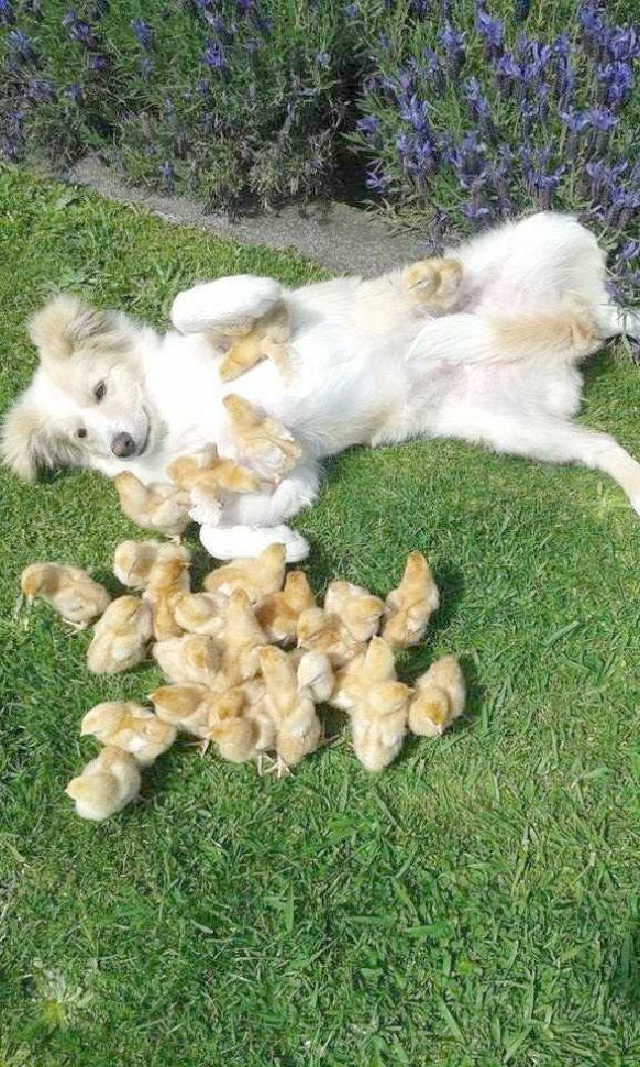 Ahhh Puppies For Adoption Near Me Free View Dogs Pinterest