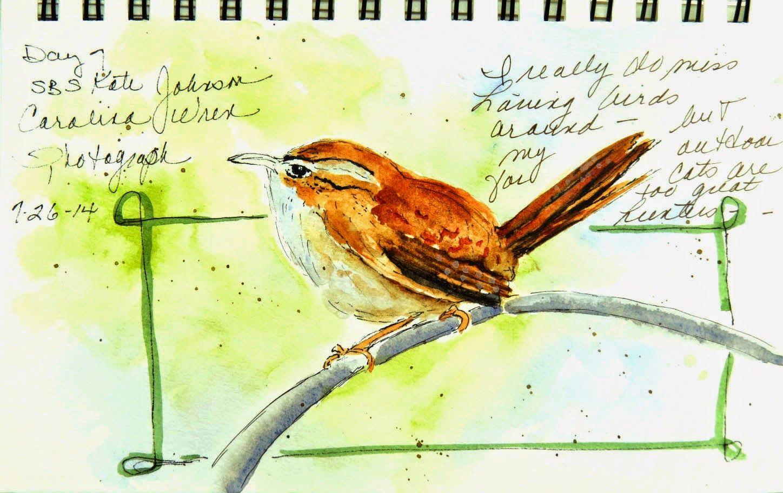 Sketching In Nature Carolina Wren Lin Frye Nature Art Bird Art Nature Journal