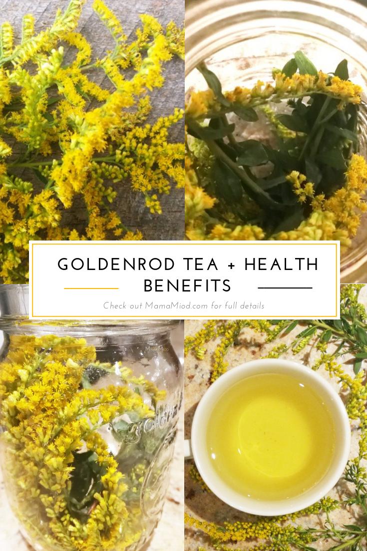Goldenrod Tea Health Benefits Mama Miod Blog Tea Health Benefits Herbal Teas Recipes Healthy Teas