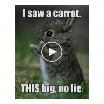 Poster shows a grey rabbit holding his arms apart and the words