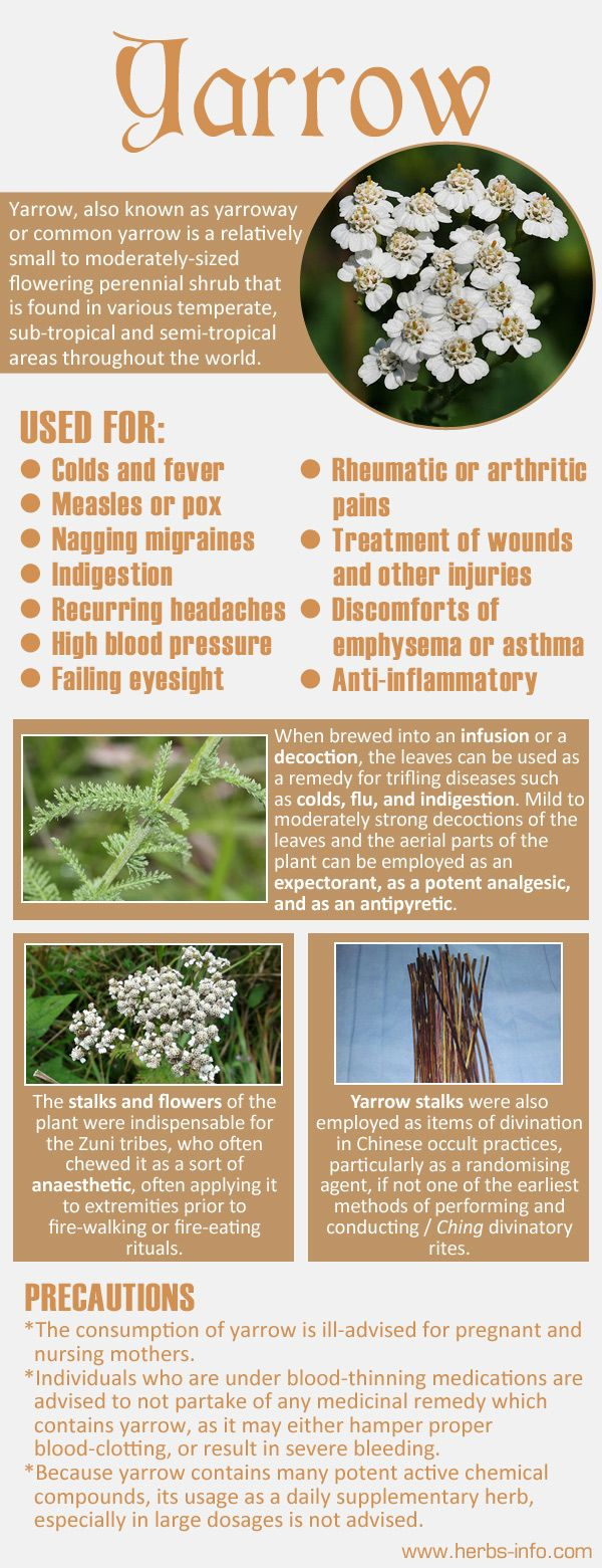 Uses And Benefits Of Yarrow Yarrow Healing Plants Yarrow Uses