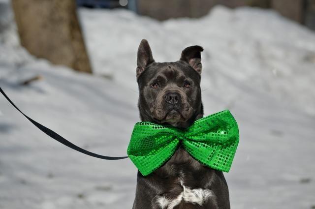 Adopt Mr. Peabody on Dog boarding near me, Dogs, Best