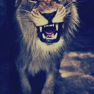 Smile! Lion!