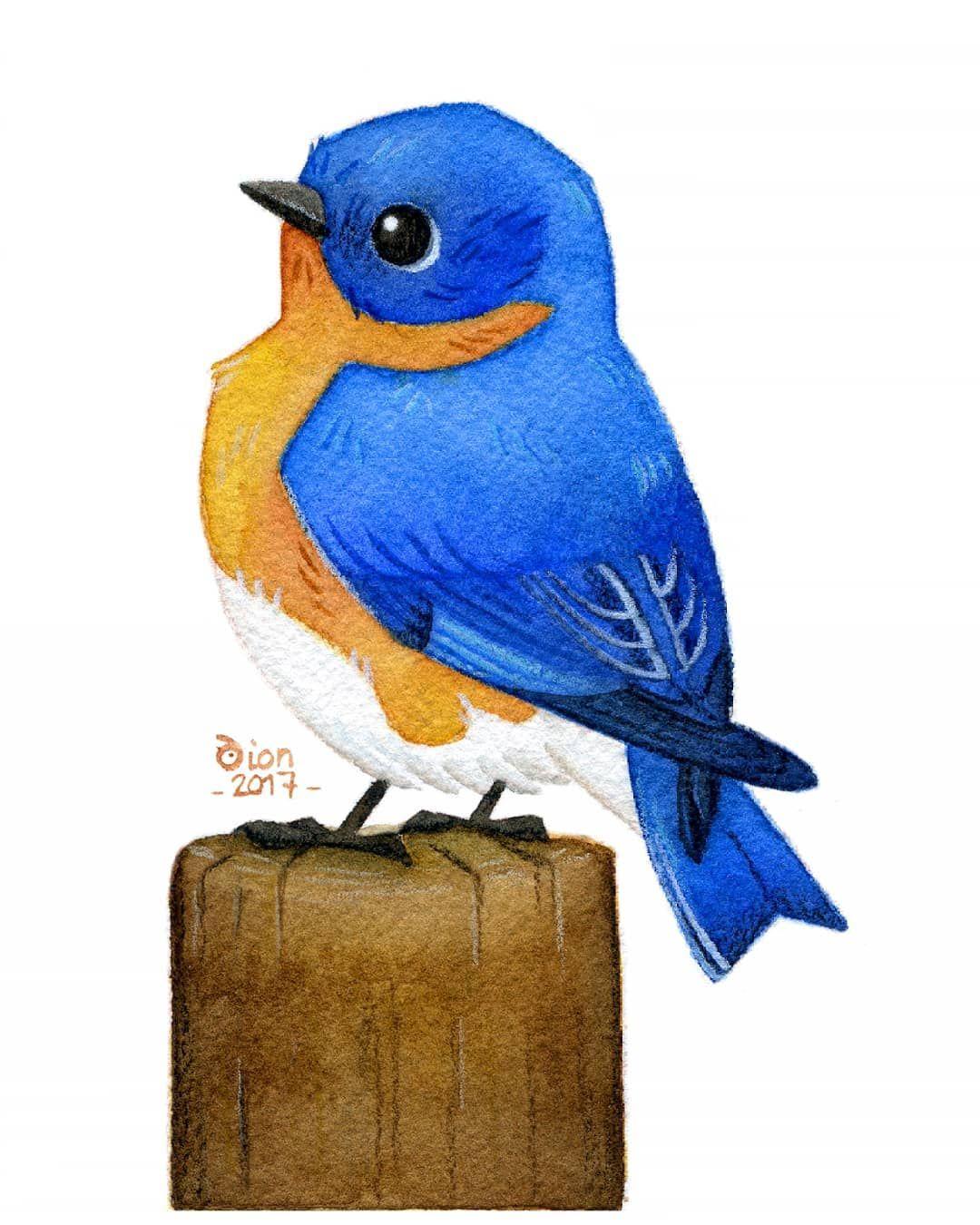 A Bird With Beautiful Colors The Eastern Bluebird Watercolor Watercolorpainting Painting Drawing Illustration Illustrator Aquarelle Bird Ornithol 동물