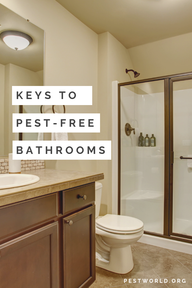 Learn About The Bugs Commonly Found In The Bathroom And How To Get