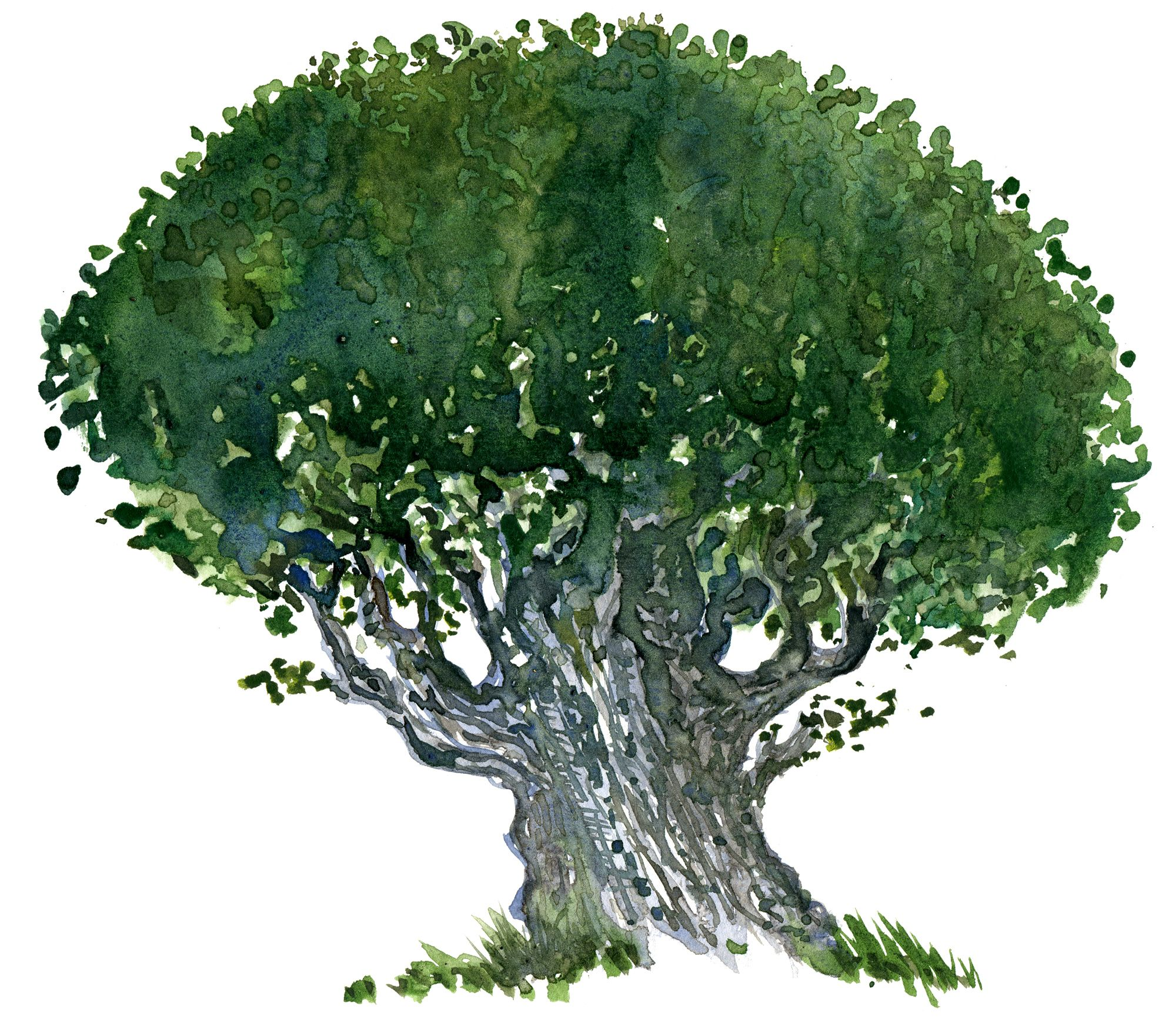 tree drawing images - Google Search | Design - trees and woods ...