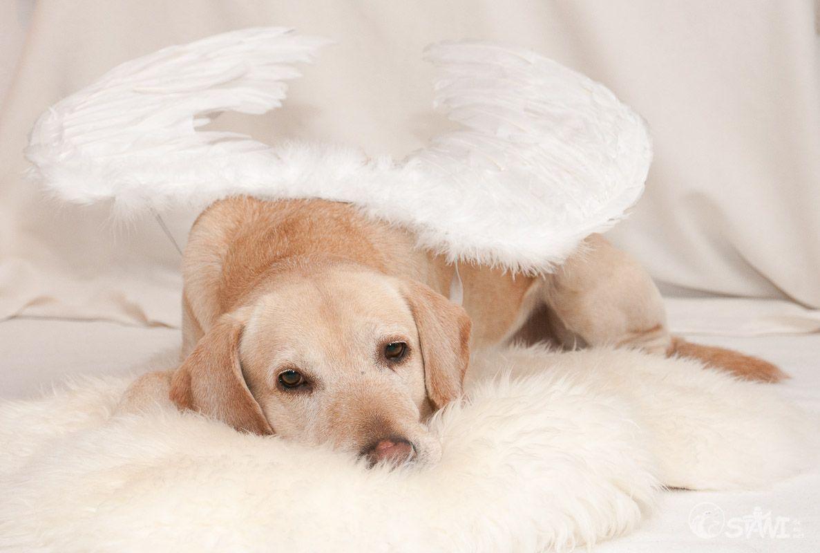 Schnitzel, der Engel.