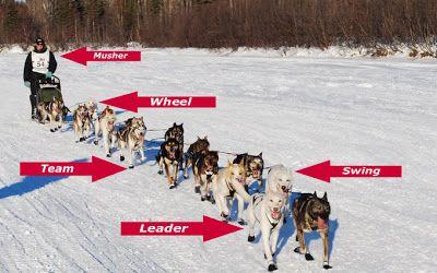 Positions Musher Dog Sledding Iditarod