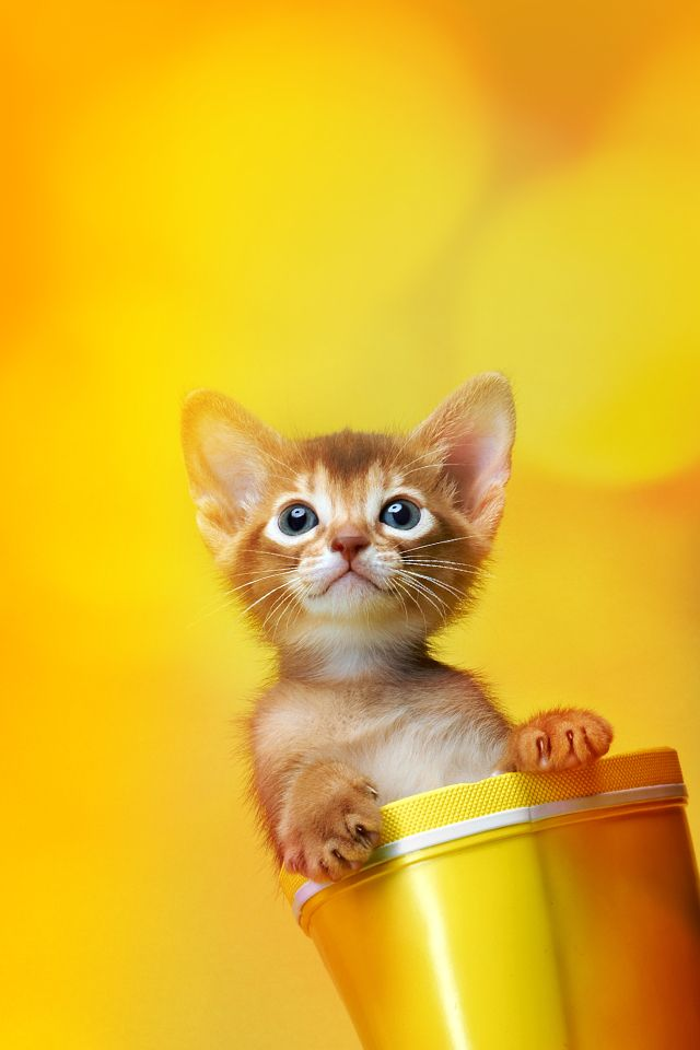 A Really Cute Cat Wallpaper