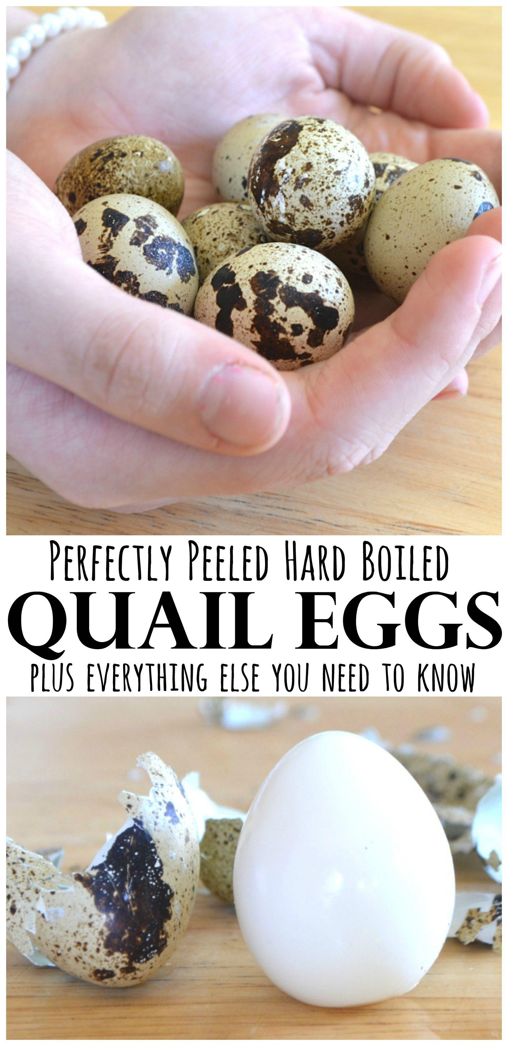 hard boiled quail eggs recipe hard boiled quail eggs and quails