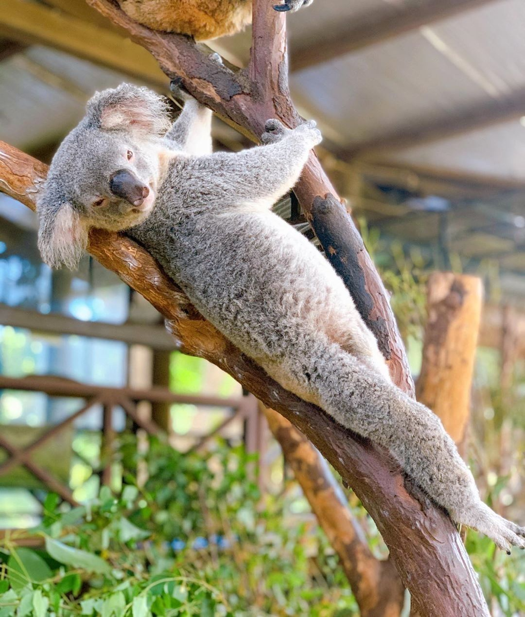 Whygetout Adventure is worthwhile. in 2020 Koala