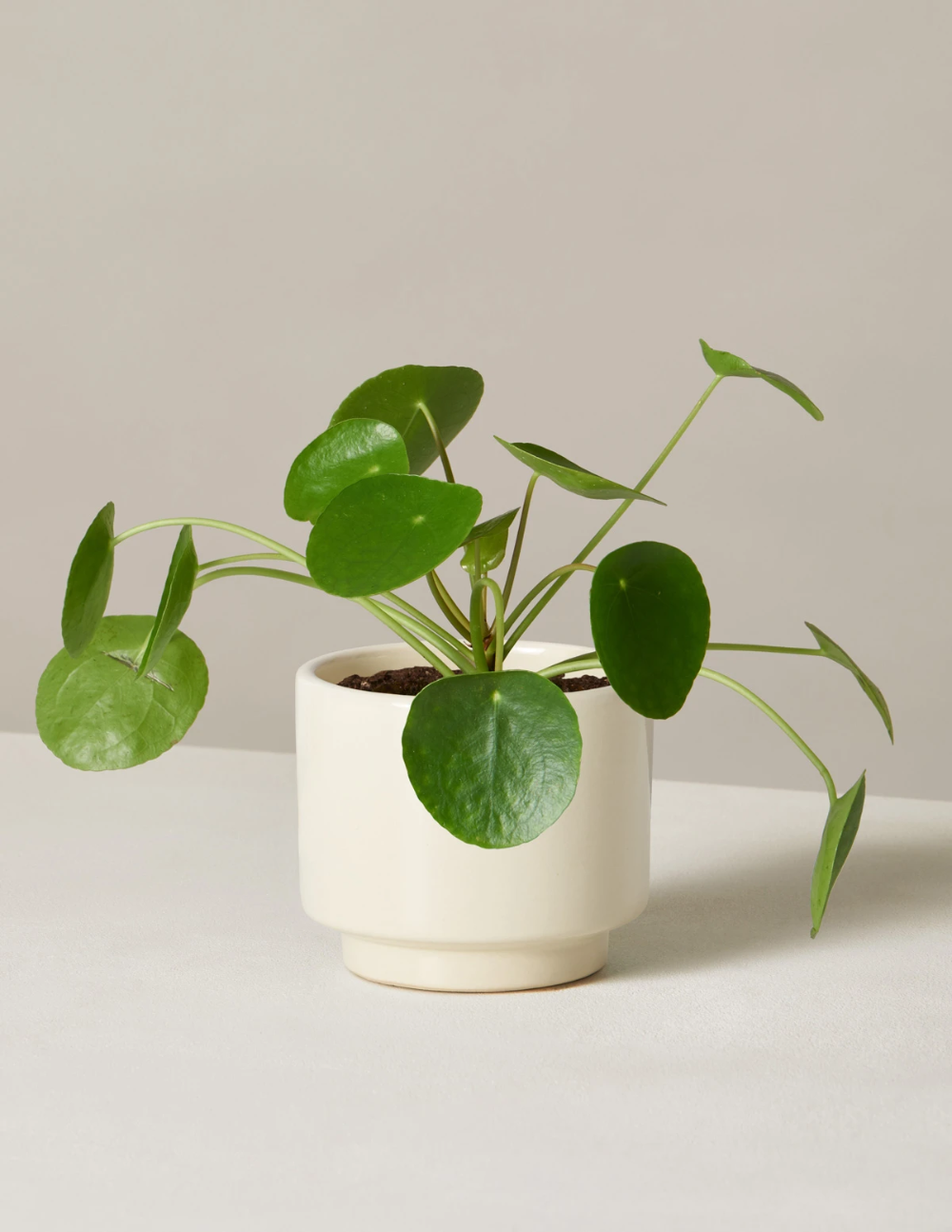 Pilea Peperomioides -   17 planting Indoor desk ideas