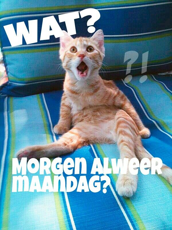 Maandag Zondag | Lol - Zondag humor, Weekend citaten en ...