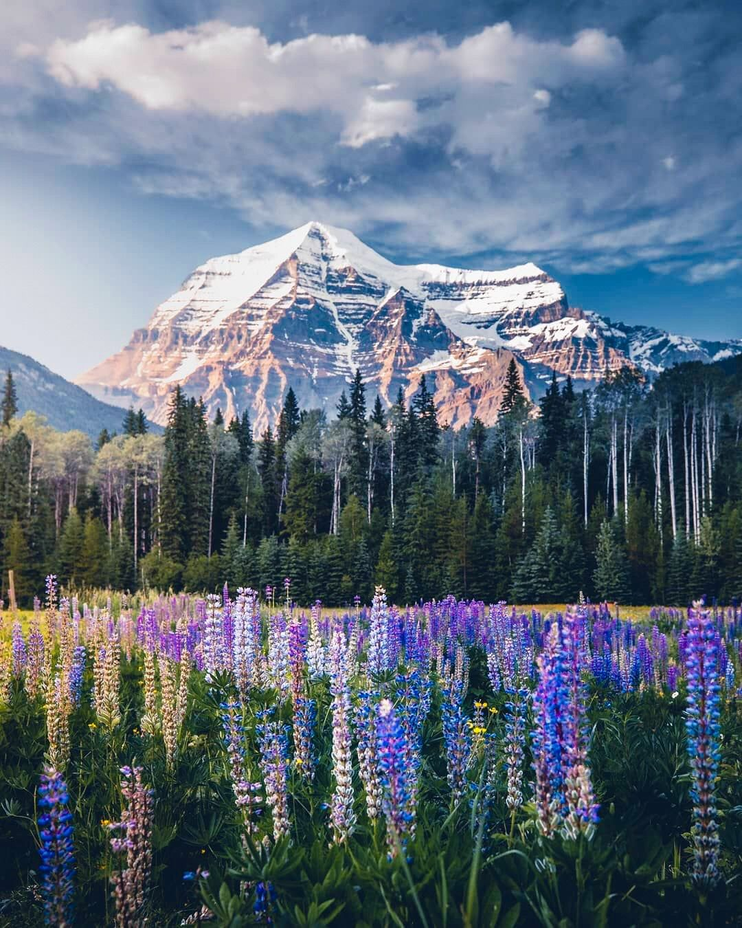 Mt Robson Highest Peak In The Canadian Rockies Mt Robson Provincial Park Bc By Martina Gebarovska Beautiful Nature Canadian Rockies Beautiful Places