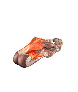 paschimottanasana seated forward bend  yoga  yoga