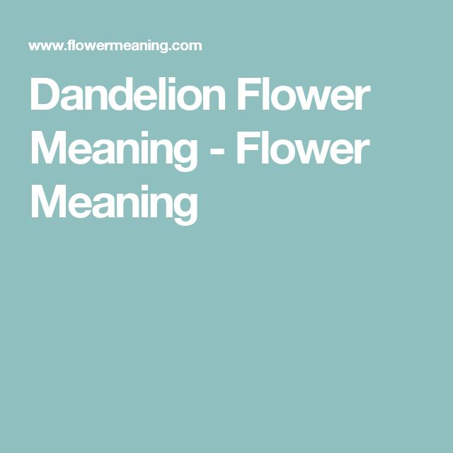 Dandelion Flower Meanings Anemone Flower Dandelion Flower