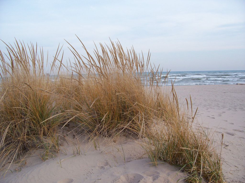 Pin By Jt Ant On Ambience Ethereal Beach Grass Beach American Beaches