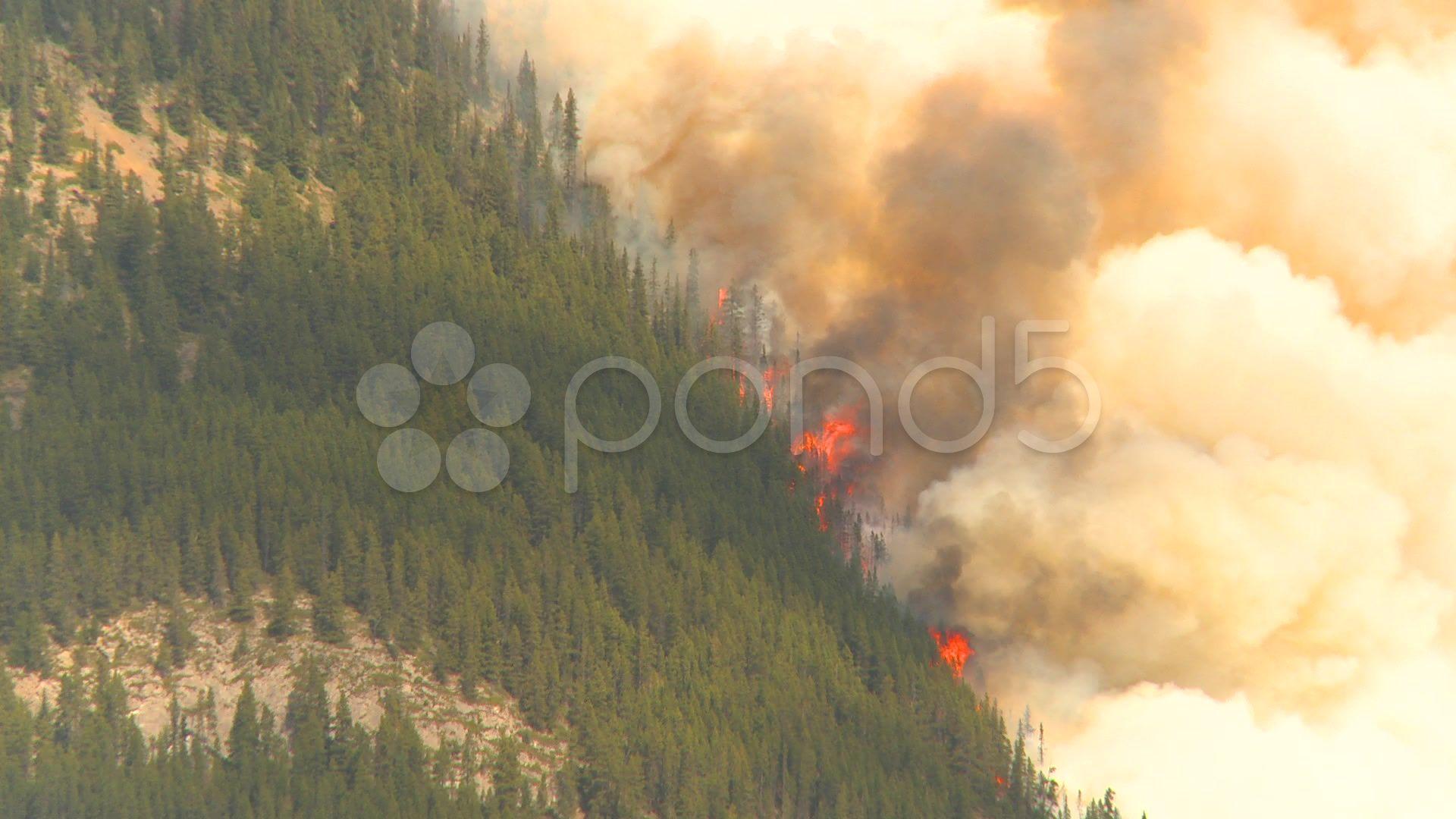 Mountain forest fire, Mt Buller Forest fire, Forest, Fire