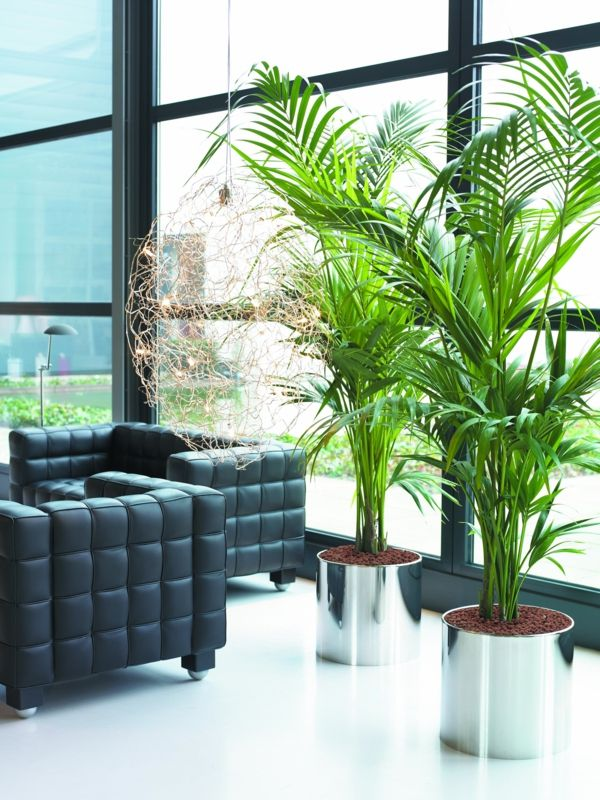 Tall Plants Living Room