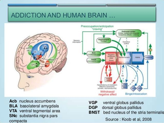 Addiction and the human brain blog images pinterest nucleus addiction and the human brain ccuart Images