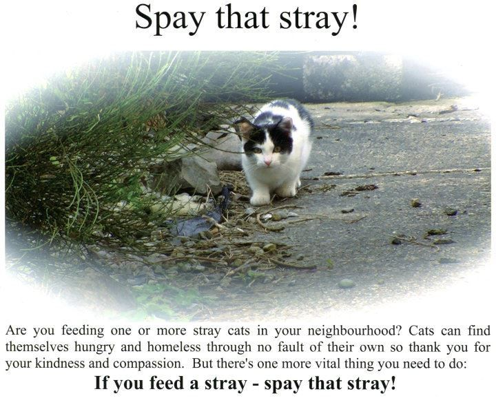 Spay That Stray Community Cat Network Animal Society Animal Rights Movement Feral Cats