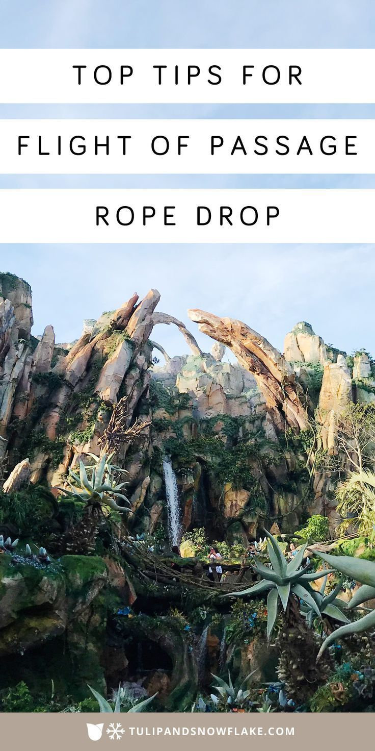 Flight Of Passage Rope Drop With Kids (With Images