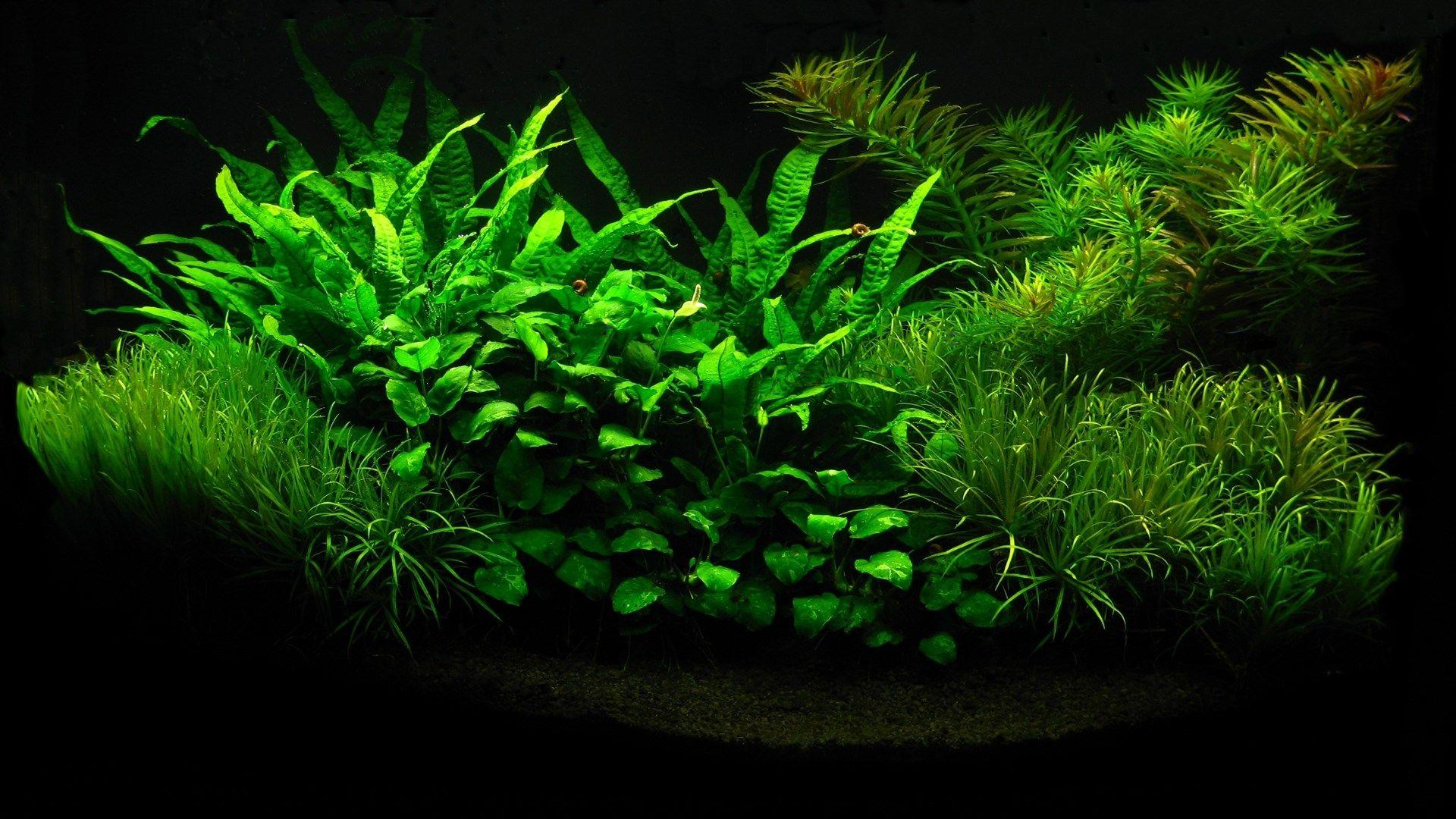 Aquarium Background 1920x1200 Aquarium Backgrounds Aquarium Underwater Wallpaper