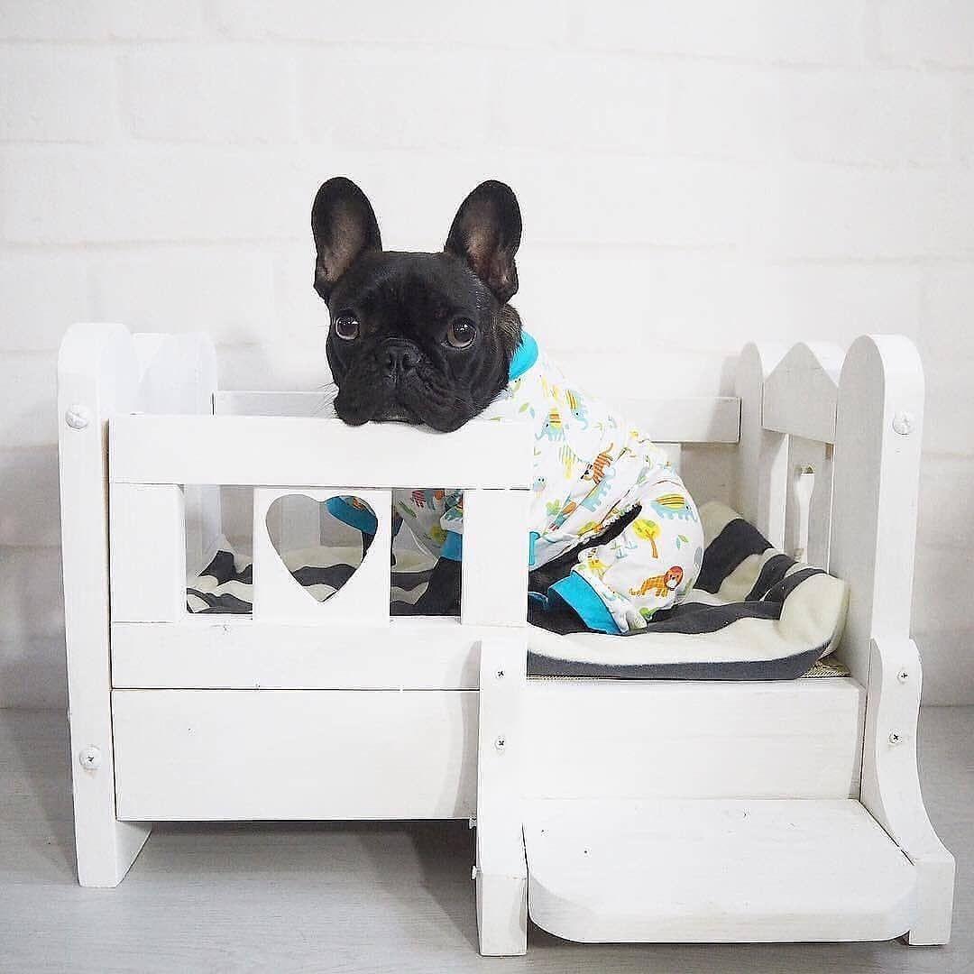 Bulldog Corner On Instagram I M A Baby Tap The Link In Our Bio Bulldog Corner To See Origin French Bulldog Bedding Bulldog French Bulldog Puppies