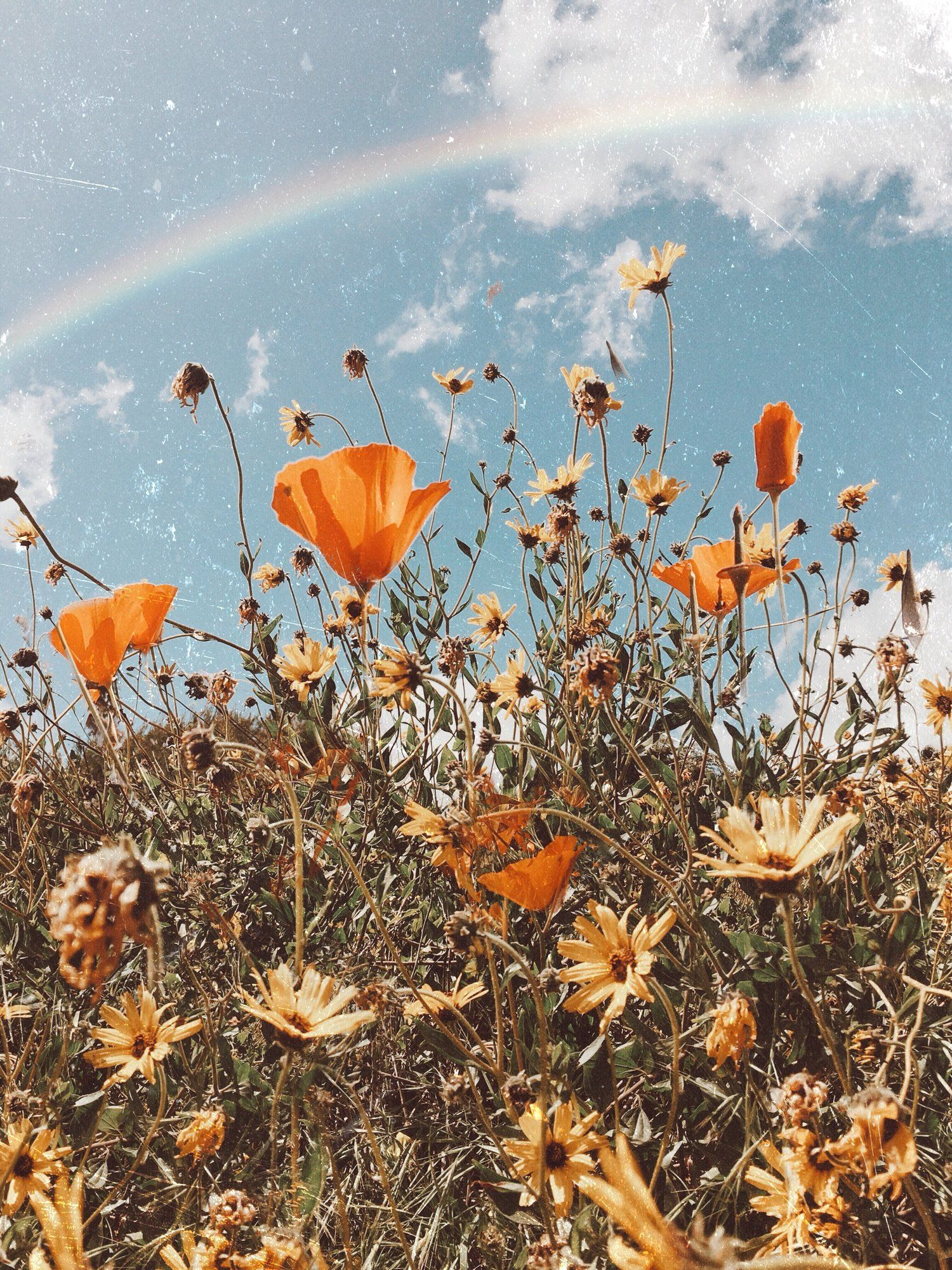 Grow A Map Of Dreams Flower Aesthetic Aesthetic Iphone Wallpaper Flower Wallpaper